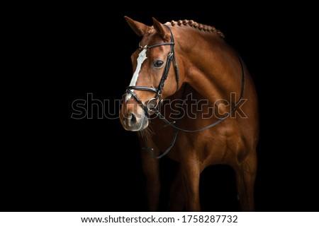 Elegant horse portrait on black backround. Horse on dark backround. Royalty-Free Stock Photo #1758287732