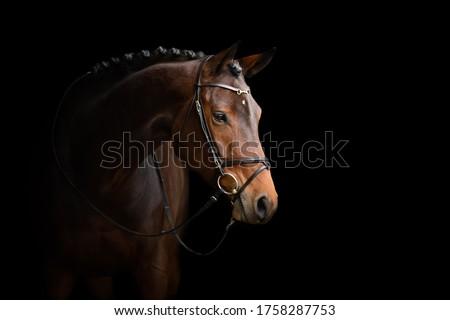 Elegant horse portrait on black backround. Horse on dark backround. Royalty-Free Stock Photo #1758287753