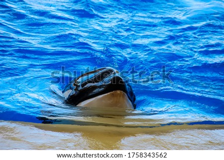 dolphin swimming in pool, digital photo picture as a background