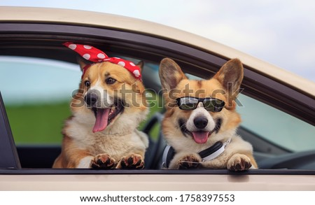 two happy Corgi dogs poked their snouts out of the car window during a summer family trip Royalty-Free Stock Photo #1758397553