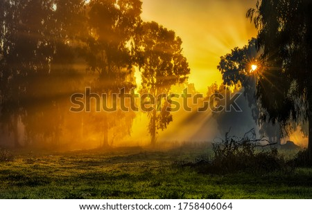 Sunrise forest sunrays nature scene. Sunrise in forest. Forest sunrise scene. Sunrise in forest landscape #1758406064