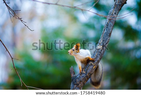 Squirrel on the forest tree