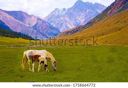 Mare and foal grazing n mountain valley #1758664772