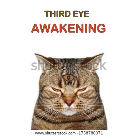The beige cat has got three eyes. Third eye awakening. White background. Isolated.