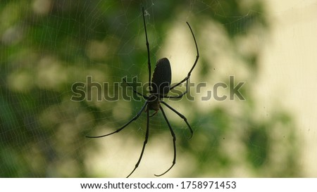 Macro pic of a spider and its web in Taman Negara jungle, Malaysia.
