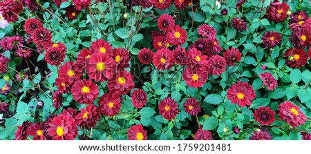 Flowers_colourfull_Flowers are reproductive part of flowering parts. A flower is a special part of a plant. Flower is also called as bloom. Flowers have petals. some flowers are too attractive.  #1759201481