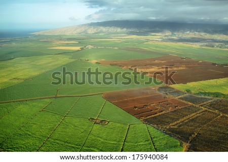 Aerial views of sugarcane crops in Maui, Hawaii. #175940084