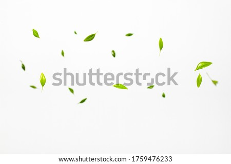 Fresh green leaves falling on white background. Levitation concept Royalty-Free Stock Photo #1759476233