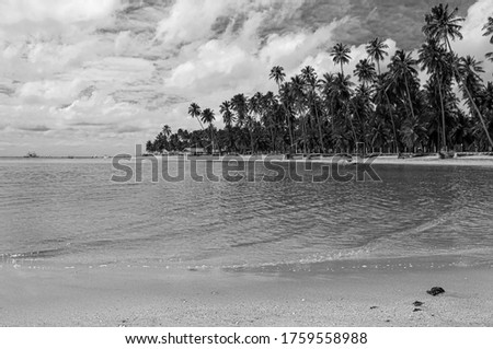 Coconut tree in Carneiros Beach, Tamandaré/PE, Brazil #1759558988