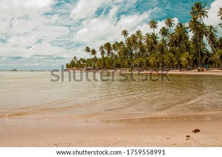Coconut tree in Carneiros Beach, Tamandaré/PE, Brazil #1759558991