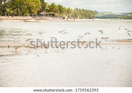 Landscape with blue ski, coconut tree in Carneiros Beach, Tamandaré/PE, Brazil #1759562393