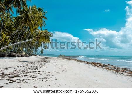 Landscape with blue ski, coconut tree in Carneiros Beach, Tamandaré/PE, Brazil #1759562396
