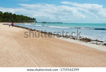 Landscape with blue ski, coconut tree in Carneiros Beach, Tamandaré/PE, Brazil #1759562399