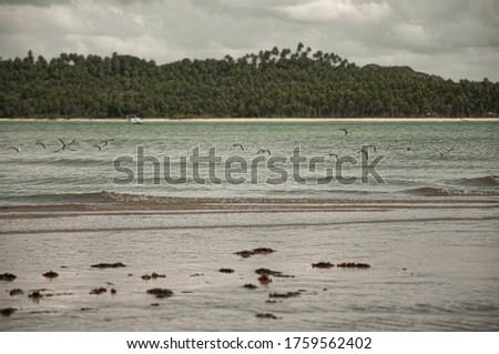 Landscape with blue ski, coconut tree in Carneiros Beach, Tamandaré/PE, Brazil #1759562402