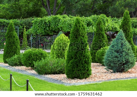 Landscaping of a backyard garden with evergreen conifers and thuja mulched by yellow stone in a summer park with decorative landscape design, nobody. Royalty-Free Stock Photo #1759631462
