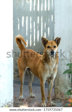 Animal which are living with me in m colony. I have taken pictures in different moods of animals.