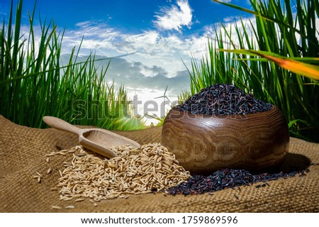 Rice is a cereal grass. With flowers and rows of rice grains There is a brown shell covering the inside of the rice kernel which has been peeled and cooked by boiling or steaming. To eat as food #1759869596