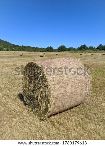Big round bales of hay and straw. In a cleaned and cut field. Straw for food in agriculture. Hay bales, straw bales. #1760179613