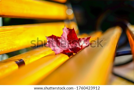 Red autumn maple leaf on park bench. Park bench autumn maple leaf. Maple leaf on wooden bench #1760423912