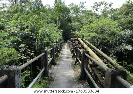 An Old Bridge Located Deep in the Forest  #1760533634