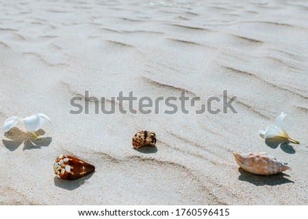 Seashells with frangipani flower not white sand on the seashore. Space for text or picture. The concept of vacation, summer.