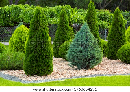 Landscaping of a backyard garden with evergreen conifers and thuja by yellow stone mulch in a summer greenery park with decorative landscape design, nobody. Royalty-Free Stock Photo #1760654291