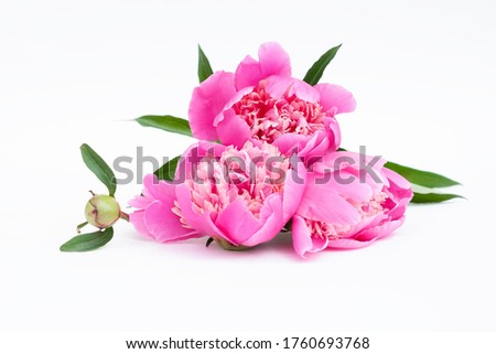 A bouquet of bright pink peony on a white background #1760693768