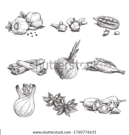 Spices, herbs and condiments set. Garlic, cloves, coriander, cinnamom sticks, onon, bay leaves, fennel, star anise and chilli peper.  Sketch hand drawn style. Vector illustrations. #1760776631