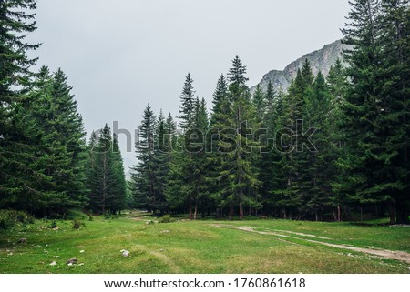 Atmospheric green forest landscape with firs in mountains. Minimalist scenery with edge coniferous forest and rocks in light mist. View to conifer trees and rocks in light haze. Mountain woodland. Royalty-Free Stock Photo #1760861618