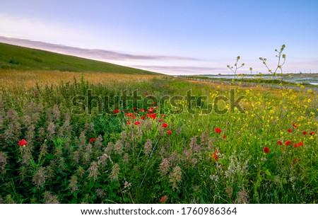 Summer meadow flowers in evening. Evening summer meadow flowers. Meadow red flowers in summer evening #1760986364