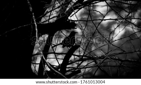 Birds in their natural habitat, bathing, calling and having fun. One pic is of bird with landscape view of tree and sky. Another one is with theme game of shadows, silhouette pic.