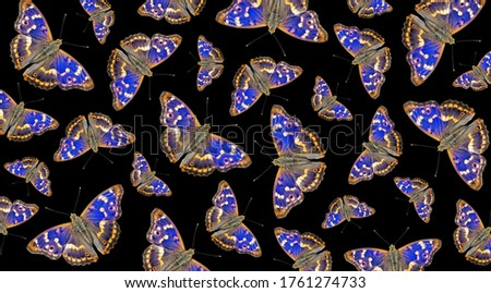 Pattern of blue butterflies on black. Bright colorful flying butterflies texture background. Ornament of butterflies. Purple emperor butterfly (Apatura iris)