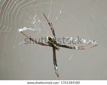 spider is main subject in this picture