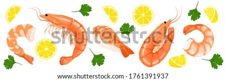 Shrimp prawn icons set. Shrimp, parsley, lemon drawing on a white background. Collection shrimp, shrimp without shell, meat, sushi. Realistic vector illustration #1761391937