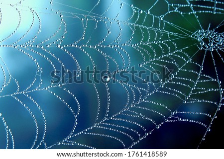 Cobweb or spiderweb natural rain pattern background close-up. Cobweb with drops of rain pattern in blue light. Cobweb net texture with morning rain bokeh. Partial blur view lines spider web necklace Royalty-Free Stock Photo #1761418589