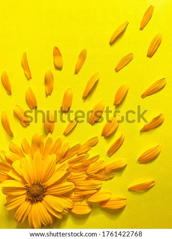 Bright yellow fresh flowers on a yellow background. Free space.