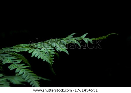 green forest fern on a black background