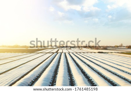 White spunbond rows on a farm field. Protective coating for corps and plants. Spunbond agrofibre row coverings and tunnels. Protecting and warmth keeping crops from frost in winter. Innovation Royalty-Free Stock Photo #1761485198