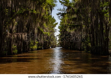 Boat access view of beautiful Caddo Lake in Texas. Branches of swamp water through overhanging swamp trees.