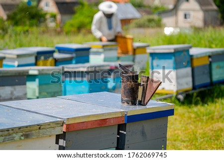 Colorful hives of bees on a meadow in summer. Hives in an apiary with bees flying to the landing boards. Apiculture. Bee smoker on hive.