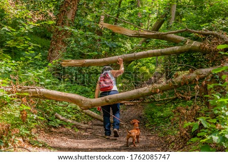 Mature woman with her dog dodging the trunks of the fallen trees that obstruct the path in the forest surrounded by vegetation and trees with green foliage, spring day in South Limburg, Netherlands Royalty-Free Stock Photo #1762085747