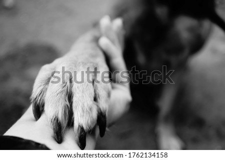 Dog paw takes woman hand. People support pets. Dog sits & gives his paw owner hand. Best friend. Human hand animal dog paw connection. The concept trust and friendship medicine. Female holding puppy Royalty-Free Stock Photo #1762134158
