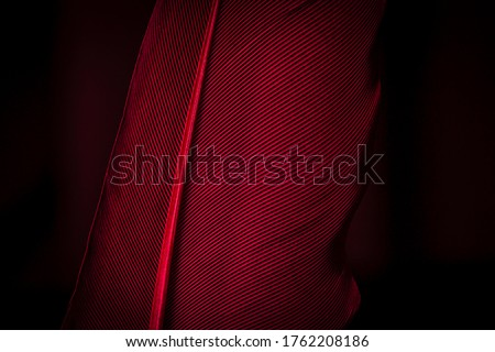 Beautiful red feather pattern texture background ,Red macro feather,Macaw Feathers (Maroon) Feather, Bird, Animal, Maroon, Red,Red feather ,Feather, Taiwan, Black Color, Close-up, Backgrounds #1762208186