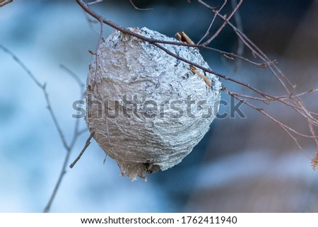 A large round wasp or hornets nest hanging in a tree by multiple small branches.  The striped grey textured layers of wooden material has formed a ball. the branches are thin with no leaves.