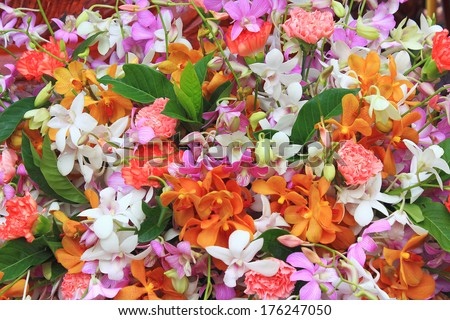 Orchid flowers background #176247050