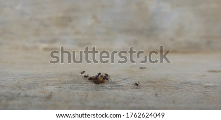 Black ants Attack on small pics of cake wallpaper