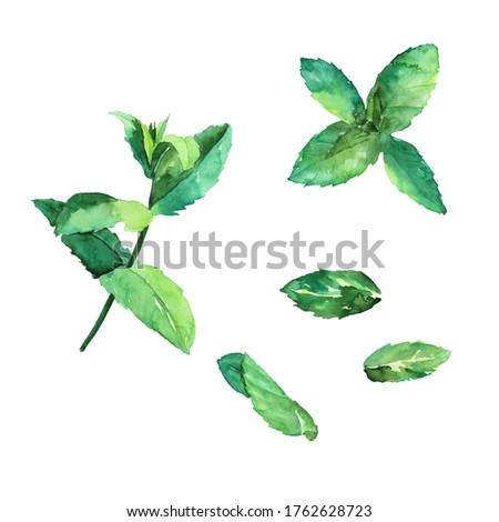 Set of mint or peppermint fresh leaves isolated on white background. Watercolor hand drawing illustration. Perfect for poster, banner, print, food decoration, medical herb. Clip art.