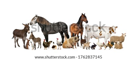 Large group of many farm animals standing together Royalty-Free Stock Photo #1762837145