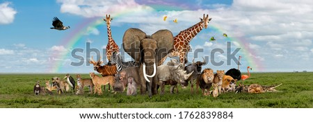 Large group of African fauna, safari wildlife animals together, in a row, isolated #1762839884