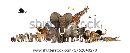Large group of African fauna, safari wildlife animals together, in a row, isolated Royalty-Free Stock Photo #1762848278
